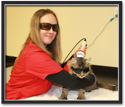 Laser Therapy for Pets in Voorheesville
